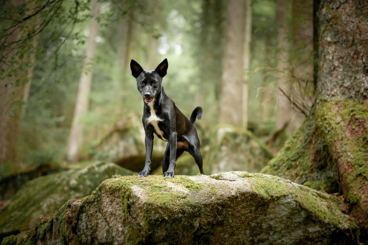 Hunde im Schwarzwald