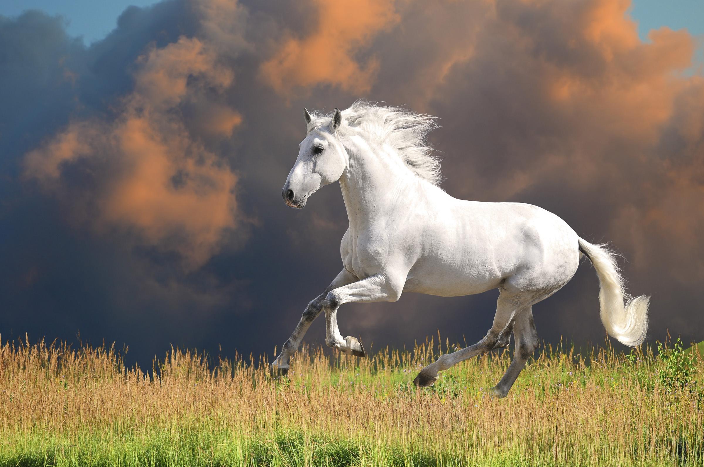 Pferdefotografie in der Natur