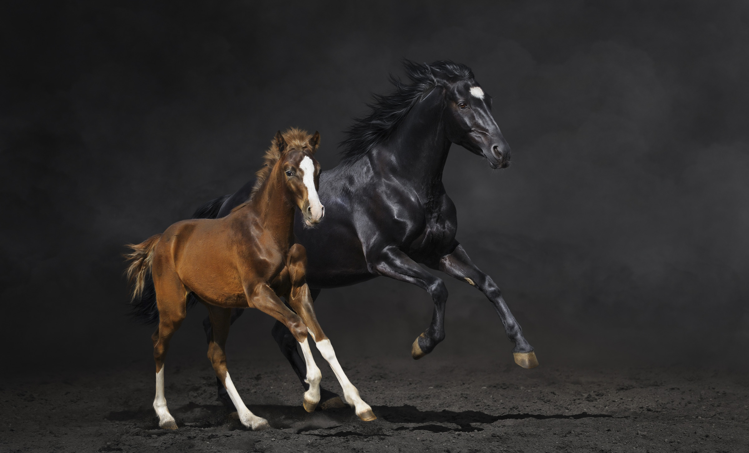 Pferdefotografie im Studio